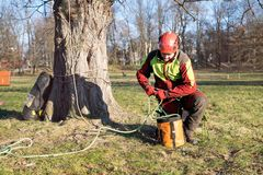 Arborist men standing against two big trees. The worker with helmet working at height on the trees. Lumberjack working with ch. Two arborist man standing against Royalty Free Stock Photos