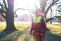 Arborist men standing against two big trees. The worker with helmet working at height on the trees. Lumberjack working with ch. Two arborist man standing against Stock Image