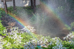 Two arcs of rainbow in blooming summer garden. Two right halves of the rainbow arc over the white colors of the host in a well-kept park on a summer day Royalty Free Stock Image