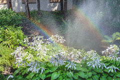 Two arcs of rainbow in blooming summer garden. Two right halves of the rainbow arc over the white colors of the host in a well-kept park on a summer day Stock Images