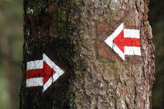 Two arrows. Two red arrows on a bark. Which way Royalty Free Stock Photo