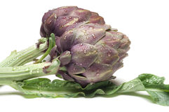 Two artichoke Stock Image