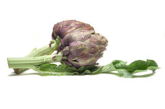 Two artichoke Royalty Free Stock Photography