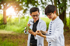 Two asian biotechnology scientist working examining plants at fo. Rest park Royalty Free Stock Image