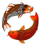 Two asian carps Royalty Free Stock Photo