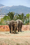 Two asian elephants in a zoo Royalty Free Stock Image