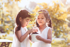 Two asian little child girls holding young tree in pot together Royalty Free Stock Photography