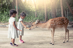 Two asian little girls feeding deer Royalty Free Stock Photo