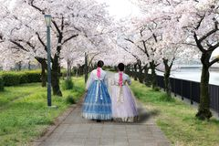 Two Asian woman wearing Korean national dress walking in park an stock images