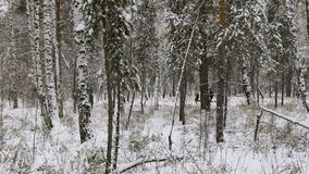 Two athletes runners running in winter woods in snow. Chelyabinsk, Russia - December 30, 2015: two athletes runners running in winter woods in snow during Winter stock video footage