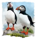 Two Atlantic Puffins on a rock. Watercolor painting Stock Photography