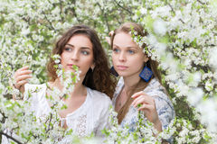 Two attractive women. Looking carefully at the branch of flowering tree Royalty Free Stock Photos