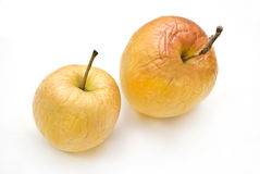 Two autumn apples. Two autumn yellow dried apples Royalty Free Stock Image