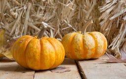 Two Autumn Gourd Royalty Free Stock Photos