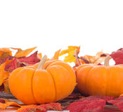 Two Autumn Gourds Royalty Free Stock Images