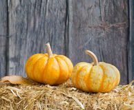 Two Autumn Gourds Stock Images