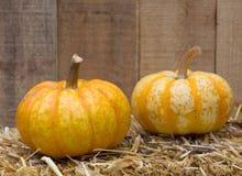 Two Autumn Gourds Stock Image