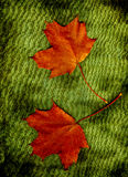 Two autumn leaves. Two red autumn leaves on green background Stock Photo
