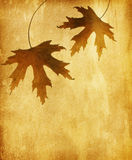 Two autumn leaves Royalty Free Stock Images