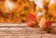 Two autumn leaves on a rustic table outdoors. Two red and orange autumn leaves on a rustic table outdoors showing the changing colors with the changing seasons Stock Photography
