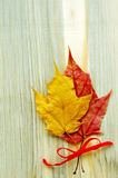 Two autumn leaves are tied with a red tape Royalty Free Stock Photo