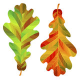 Two autumn oak leaves isolated on white background. Vector Illustration Stock Photography