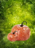 Two autumn pumpkins. On green background stock photos