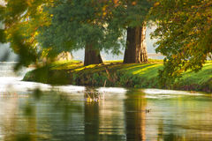 Two autumn riverside trees Royalty Free Stock Photo