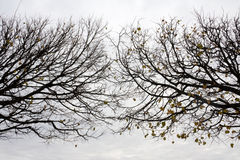 Two Autumn Trees Stock Photography