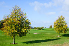 Two autumn trees on a golf course Royalty Free Stock Photo