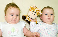 Two babies stock photo