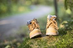 Baby boot forest. Two baby boot in forest forest on a rock Stock Image