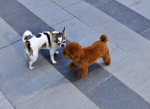 Two Baby Dogs. On the ground stock images