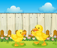 Two baby ducks inside the fence Royalty Free Stock Photos