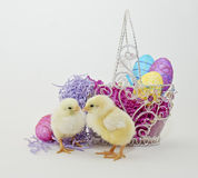 Two Baby Easter Chicks Stock Images