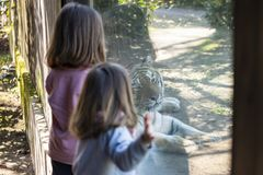 Two baby girls watching a tiger in a zoo. Two baby girls watching a siberian tiger through the glass of its enclosure royalty free stock photo