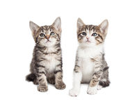 Two baby kittens over white background Stock Photo