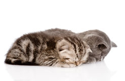 Two baby kittens sleeping. isolated on white background Royalty Free Stock Photo