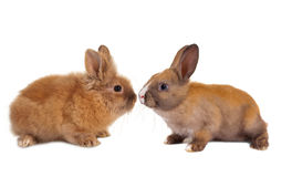 Two baby rabbits Stock Photo