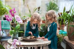 Two baby sisters in a winter garden behind an old wooden wooden rustic table with flowering orchids and a tub of water and stones. stock photos