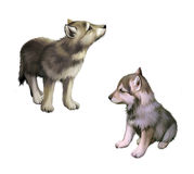 Two baby wolfs, puppies. Realistic illustration on white background Royalty Free Stock Photo
