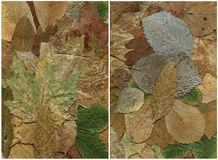 Two backgrounds of dry leaf Royalty Free Stock Images