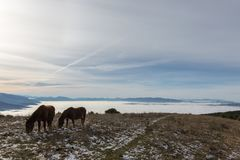 Two backlit horses, eating grass, on top of a mountain, with som. E distant and misty mountains on the background Royalty Free Stock Photos