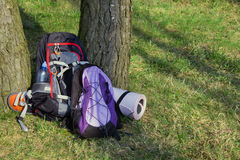Two backpack in the forest. Nobody. Foto Royalty Free Stock Photography