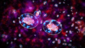 Two bacteria or germs or cells againt each other. Royalty Free Stock Image