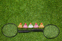 Two badminton rackets with color shuttlecocks Stock Image