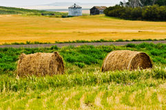 Two Bales of Straw. Along road side with wheat field, trees, and farm buildings in background Royalty Free Stock Photo