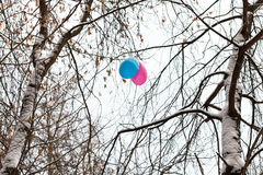 Two balloons in branches of trees in winter Royalty Free Stock Images