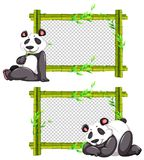 Two bamboo frames with cute panda. Illustration Royalty Free Stock Images