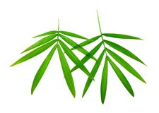 Two bamboo leaves Stock Images